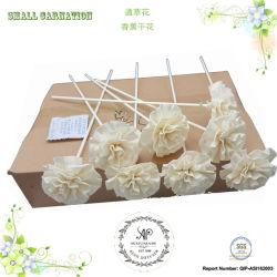 Gartennelke-REEDdiffuser- (zerstäuber)dekoration-Zusatzgerät der Sola Blumen-8PCS/Box, trockene Blume