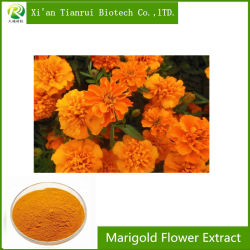 100% натуральные Lutein 5%-98% Marigold Flower Extract