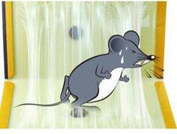 فأرة يصيد غراءة لوح, ورقيّة غراءة لوح, لزجة [تربّر] قارض فأرة
