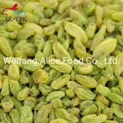 安い価格の卸売の中国の緑の干しぶどうの良質のブドウ