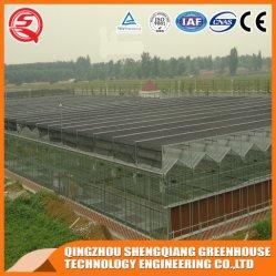 Multi-Steel Structure Glass Garden Kweektang/Kas voor Bloem