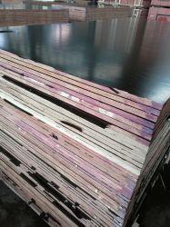 Le film de la première pente a fait face au contre-plaqué de Huabao pour Shuttering/béton