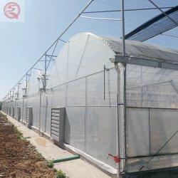 زراعة الخضار / الطماطم / الخس Hydroponic النظم السعر البلاستيك فيلم الدفيئة