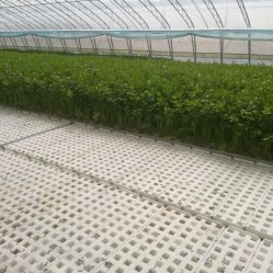 Nft agricole commercial/dft Tuyau PVC canal System/croissante de la culture hydroponique pour Leaf végétales/salade de laitue/