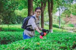 Aparador de cobertura sem fio 2020 36V Bateria Elétrica Aparador Hedge Aparador de hedge da China na venda a quente