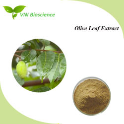 Estratto verde oliva naturale del foglio di alta qualità per migliorare immunità