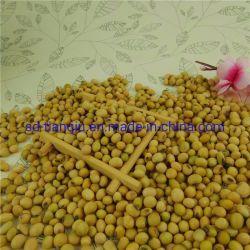 Sojaboon met Beste Kwaliteit op Hete Verkoop niet-GMO