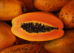 Свежей папайи с низкой цены на продажу