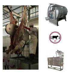 販売のための装置の食肉処理場装置を屠殺している牛牛