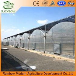 Túnel Multi-Span inteligente / Arco Tipo PE / Po película plástico Agrícola / Comercial Eco Invernadero para Tomate/ Cucumber sistema de cultivo de Hydroponics de Fresa