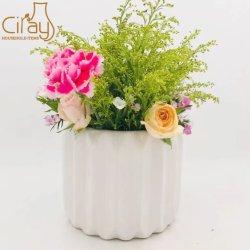 Indoor Stripe Pattern Fleur pot de plantes succulentes en céramique