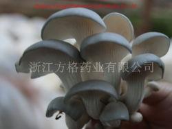 منتجات العناية الصحية بالفطر، مسقط رأس موشورز الصينية، بودر بلوروتوس أوستراتوس