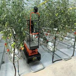 Innen Landwirtschafts-Teildienst-Gartenbau-Geräten-Werbungs-Gewächshaus wachsen