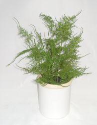 Los espárragos artificial Helecho en cerámica Sembradora - Planta en maceta Artificial