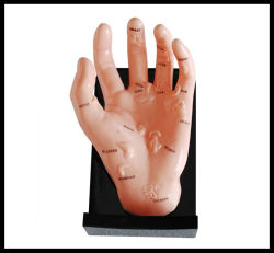 Modelo de la mano de masaje (M-7-12) La acupuntura