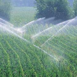 Vegetable (アミノ酸の群葉肥料)のための有機肥料
