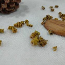 Venta caliente nutracéuticos las materias primas 3 años Dendrobium Officinale ricos en polisacáridos