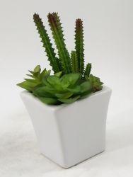 Plantas suculentas Artefactos artificiais