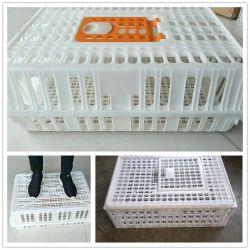 L'azienda avicola ha usato la gabbia di plastica di trasporto del pollo