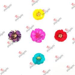La moda de la naturaleza coloridas flores de Hibiscus en seco para Lockets regalos (NDF50822)