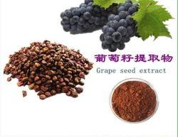El extracto de semilla de uva de alta calidad de productor mayorista