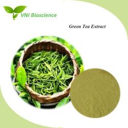 Certifiée ISO 100% naturel extrait de thé vert de la perte de poids
