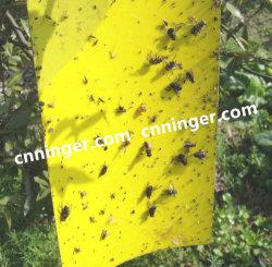 Placa adesivas amarelas de insetos em árvores inseto agrícolas Armadilha de cola