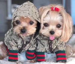 أزياء الخريف والشتاء الكلب Zipper نمط Letter الحيوانات الأليفة معطف