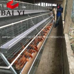 Pollicultura dell'uovo della gabbia del pollo di strato nel Kerala da vendere