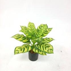 Factory Outlet plante artificielle décorative en plastique de Simulation de petites Bonsai