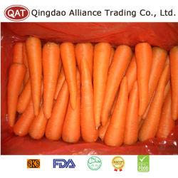 Zanahoria fresca de calidad superior con el estándar de exportación