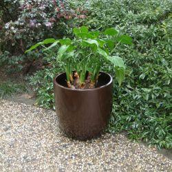 Fo-185 FIBRE DE VERRE Pot de fleur jardin décoration Vase d'accueil du semoir