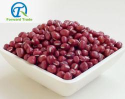 Good Quality를 가진 중국 Low Price Red Adzuki Beans