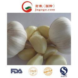 Export-gute Qualitätsfrischer chinesischer Knoblauch-Frischgemüse-frischer Knoblauch
