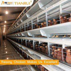 Gabbia automatica del pollo di strato della batteria della strumentazione dell'azienda avicola di buoni prezzi da vendere