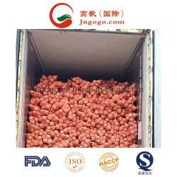 Exportação de Produtos Hortícolas Frescos Boa qualidade cebola Amarela
