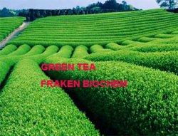 Tee-Auszug der Qualitäts-40-98% grüner der Polyphenol-30-98% EGCG