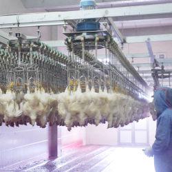 3000bph высокое качество куриного мяса линии убоя птицы животноводстве содержится для продажи