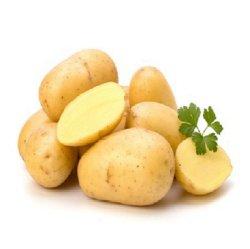 Récolte fraîche Pommes de terre de qualité Premium