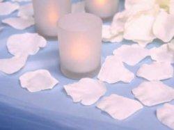 زهري فاش وردي زهرة بيزال الزهور الديكور لحفلات الزفاف