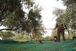 Пластиковый плодовых деревьев, PE взаимозачет урожая в оливковых