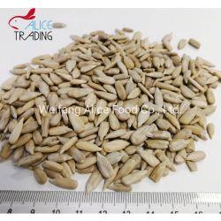 Las semillas de girasol sin cáscara Tostado y salado