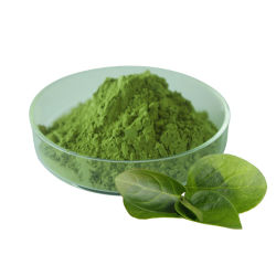 طعام عالي الجودة Instant Matcha Green Tea Powder