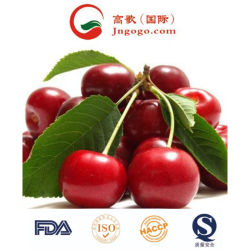 최고 품질의 IQF 냉동 과일과 체리