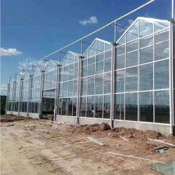 Grande serra di vetro agricola intelligente automatica con il sistema idroponico di irrigazione goccia a goccia della coltura Soilless