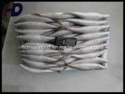 Alimentação de peixes congelados de marisco sardas (Scomber japonicus)