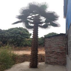De grote Binnen Openlucht Decoratieve Plastic Altijdgroene Kunstmatige Palm van de Boom