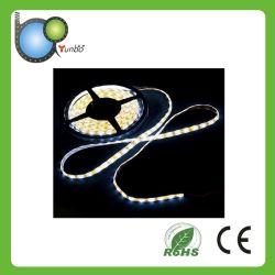 Striscia LED di basso costo SMD3528 di alta qualità