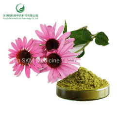 Echinacea purpurea травы извлечения Cichoric кислота 4% травяной