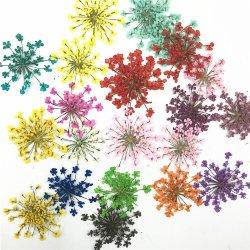 2,5-3cm mezcla de encaje Minoico Color Natural Dried prensado Flores para Pegatinas de uñas artesanado genuinamente Joyas Botánicas